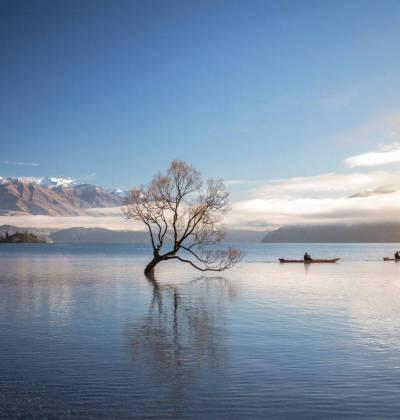 Lake Wanaka with tree